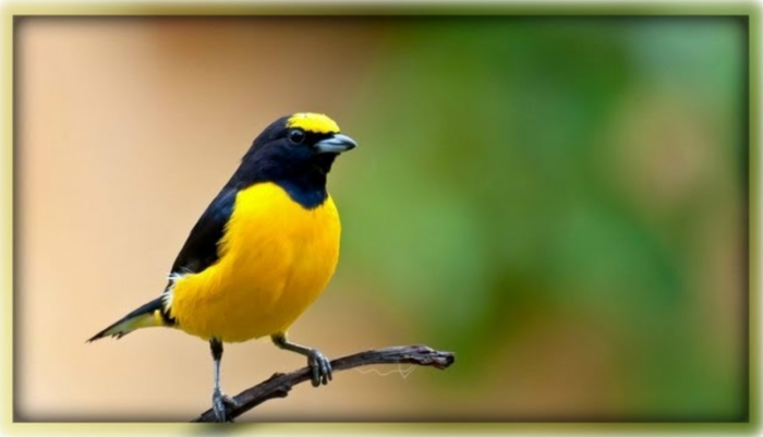 Google Uses Artificial Intelligence to Map Thousands of Bird Sounds Into an Interactive Visualization
