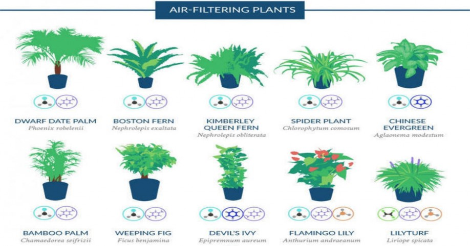 Graphic shows the house plants that naturally clean the for Best air filtering houseplants