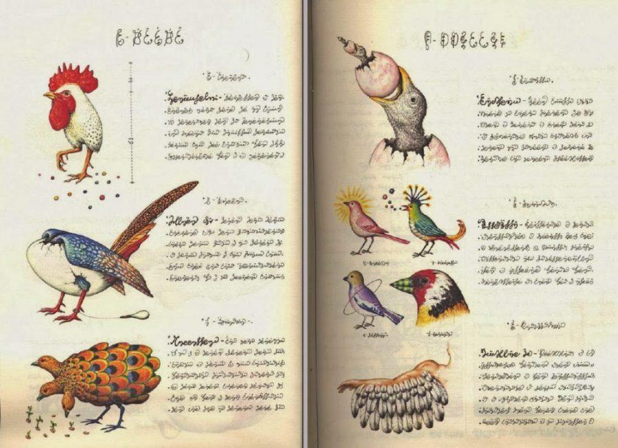 Codex Seraphinianus Luigi Serafini   amazoncom