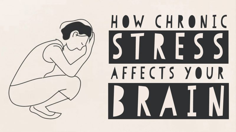 Animated Video How Stress Affects Your >> How Stress Can Change Your Brain An Animated Introduction Open
