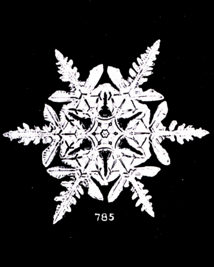 the first photographs of snowflakes discover the groundbreaking