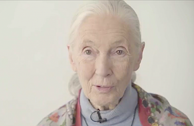 Jane Goodall Now Teaching a Free Online Course on Developing Compassionate Leaders: Enroll and Start Today