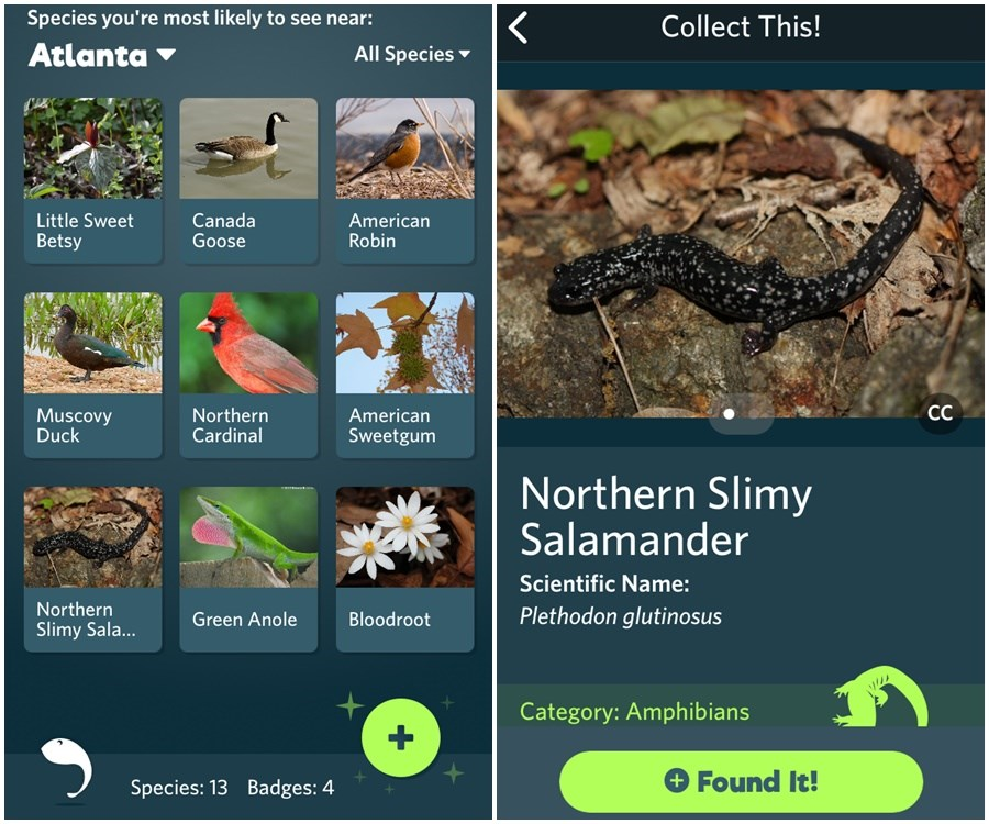 A Shazam for Nature: A New Free App Helps You Identify
