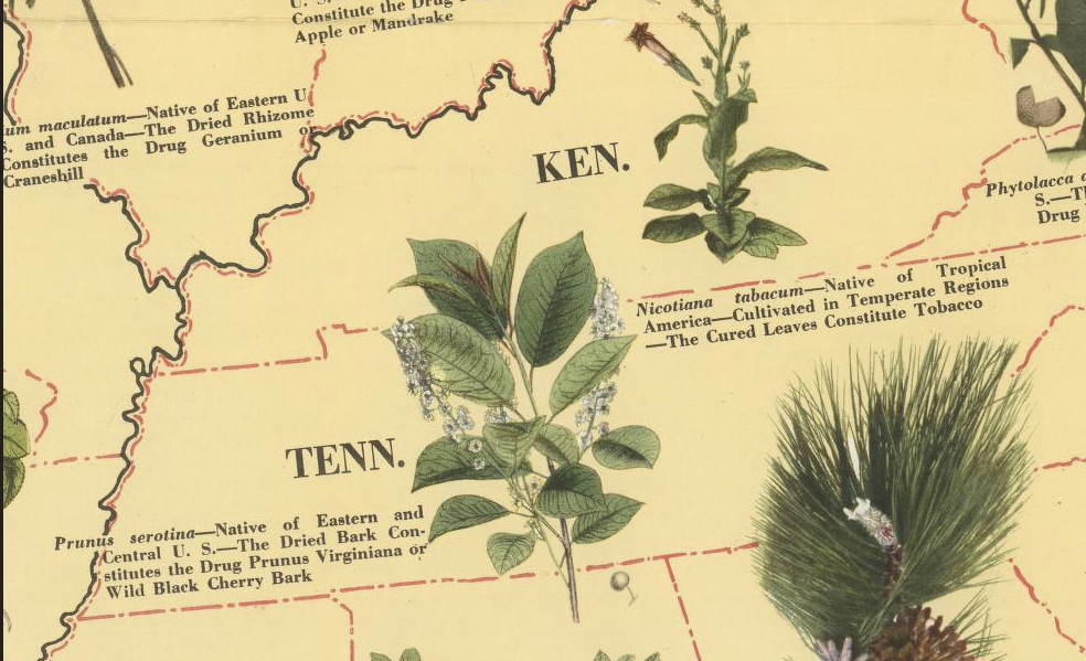 The Illustrated Medicinal Plant Map of the United States of America