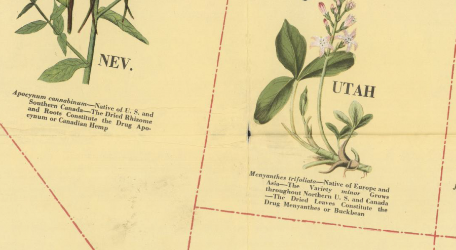 The Illustrated Medicinal Plant Map of the United States of