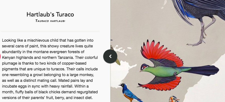 Explore an Interactive Version of The Wall of Birds, a 2,500