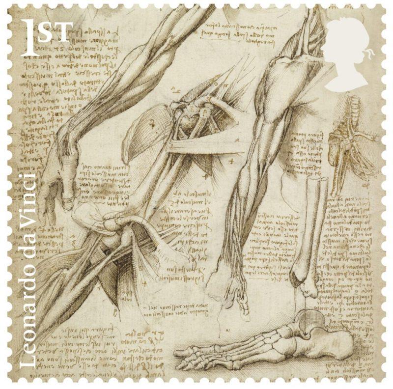 famous drawings by leonardo da vinci celebrated in a new