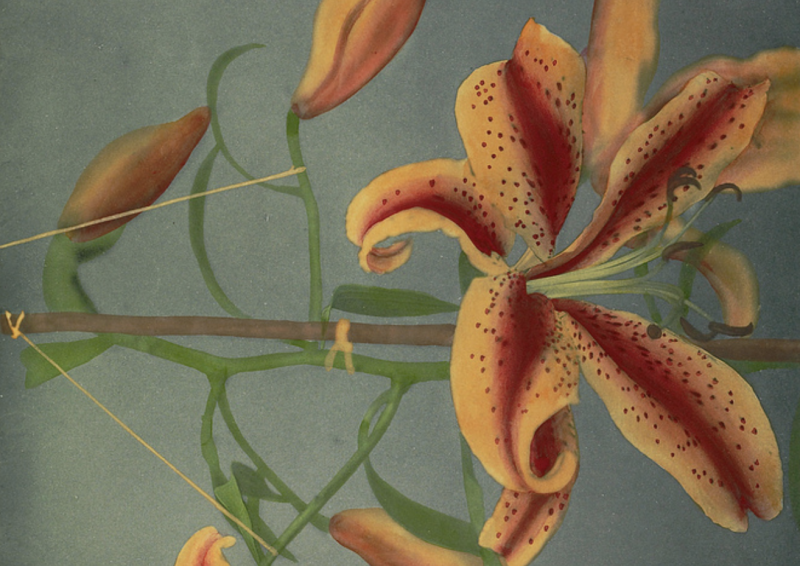 Beautiful Hand-Colored Japanese Flowers Created by the Pioneering Photographer Ogawa Kazumasa (1896)