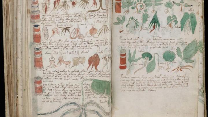 voynich manuscript adalah
