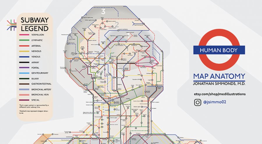 A Subway Map of Human Anatomy: All the Systems of Our Body Visualized in the Style of the London Underground