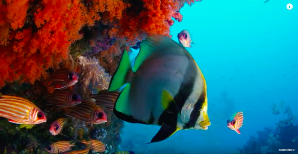 Chill Out to 70 Hours of Oceanscape Nature Videos Filmed by BBC Earth