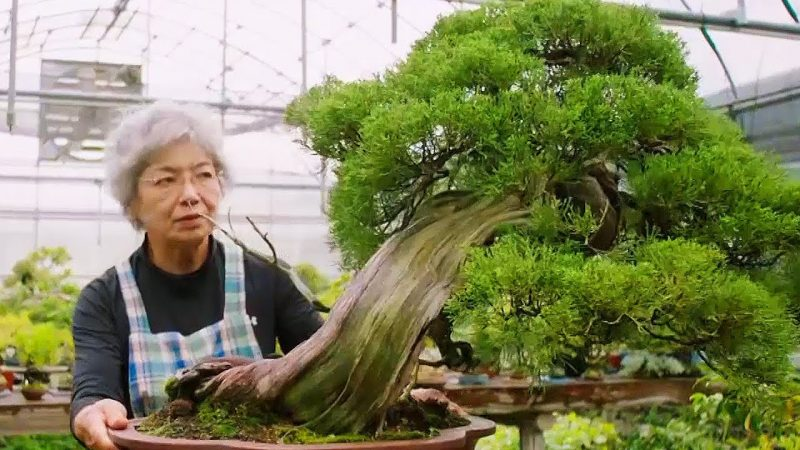 The Art Philosophy Of Bonsai Open Culture