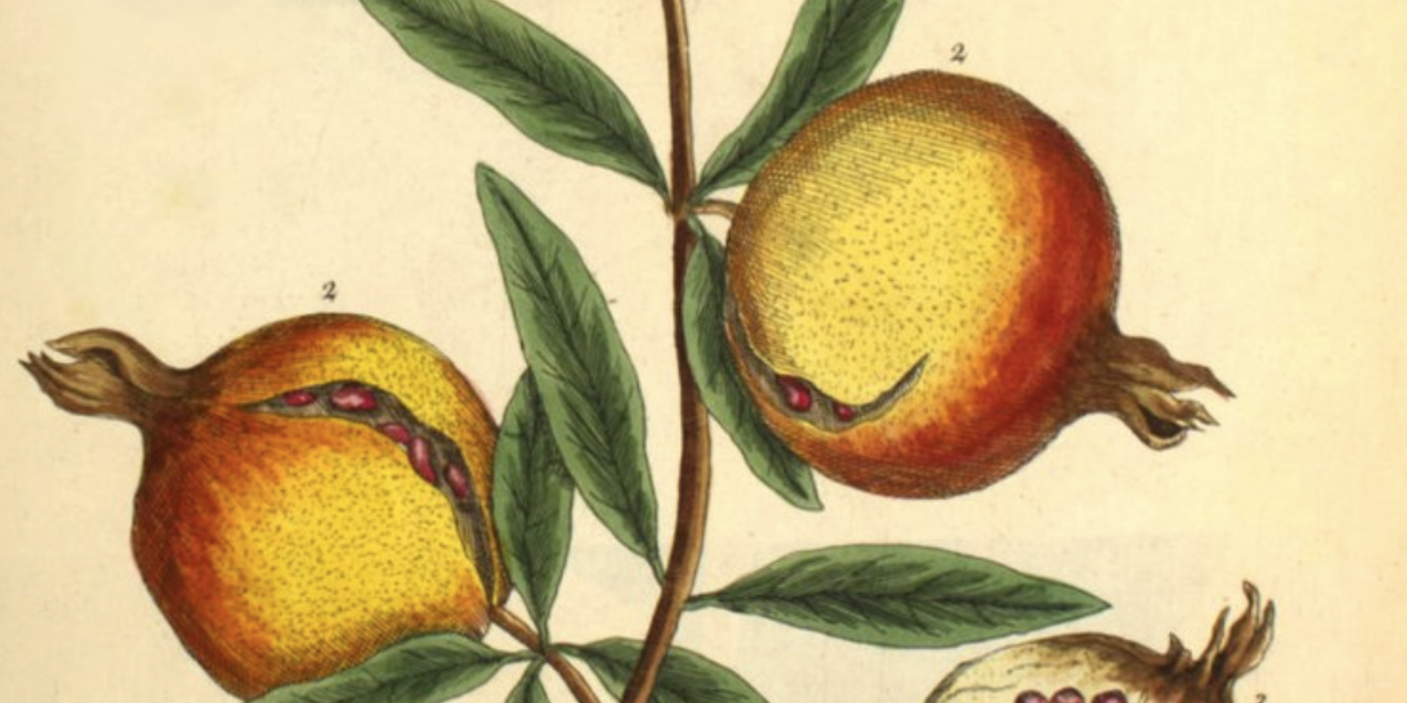 A Curious Herbal: 500 Beautiful Illustrations of Medicinal Plants Drawn by Elizabeth Blackwell in 1737 (to Save Her Family from Financial Ruin)