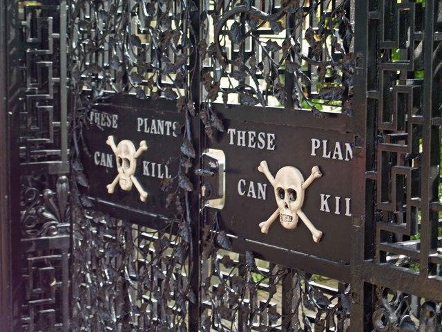 The Deadliest Garden in the World: Visit Alnwick's Poison Garden in Northumberland, England