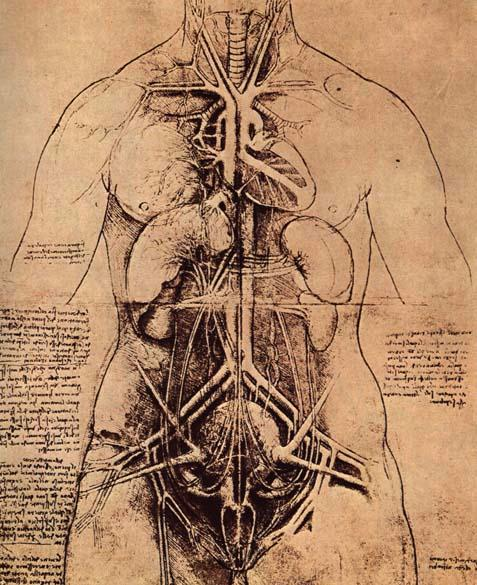 The Anatomical Drawings Of Renaissance Man Leonardo Da Vinci Open