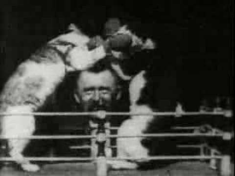 The boxing cats prof weltons - youtube