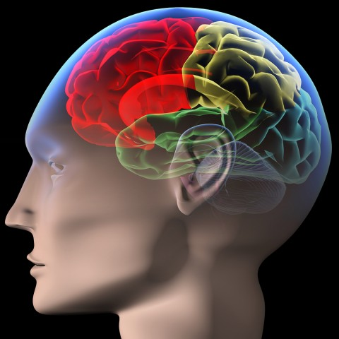 bigstock-Brain-2819159