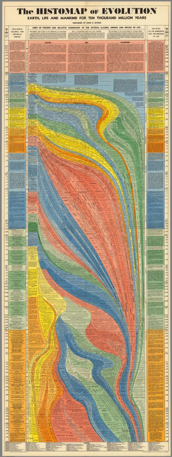 10 million years of evolution visualized in an elegant 5 foot long 10 million years of evolution visualized in an elegant 5 foot long infographic from 1931 fandeluxe Image collections