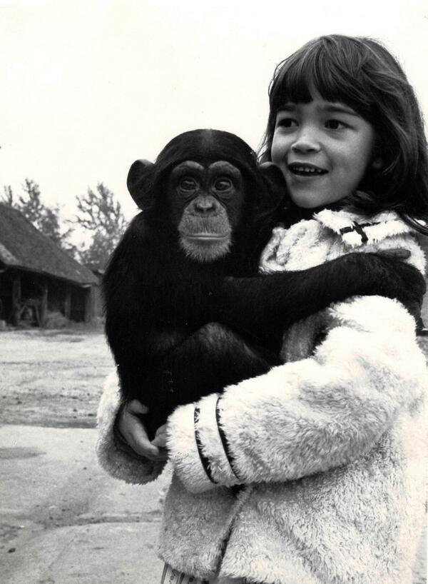 chimp kubrick