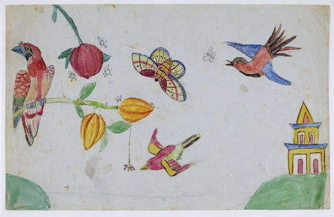 darwin Children's drawing