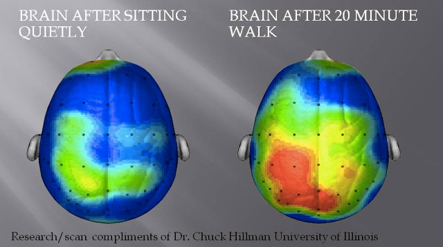 This Is Your Brain on Exercise: Why Physical Exercise (Not Mental Games) Might Be the Best Way to Keep Your Mind Sharp