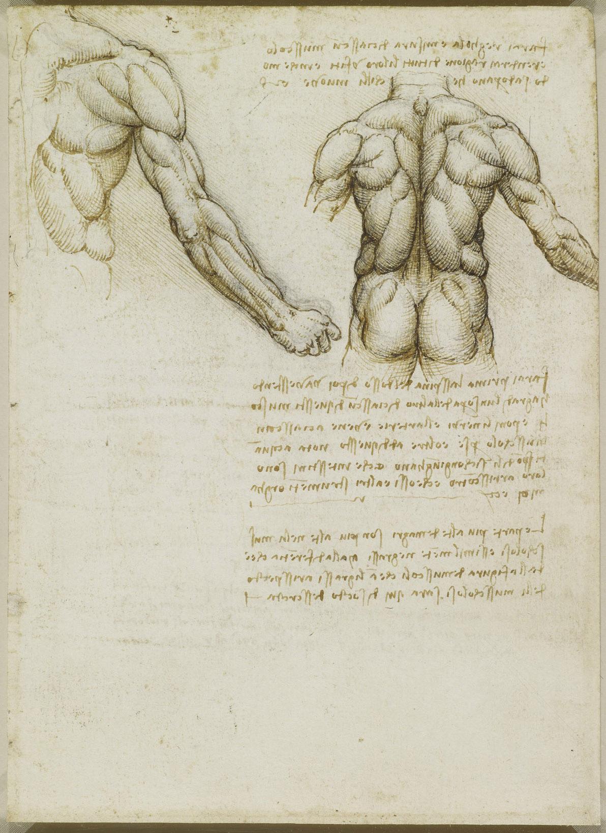 Pdf vinci leonardo da anatomy