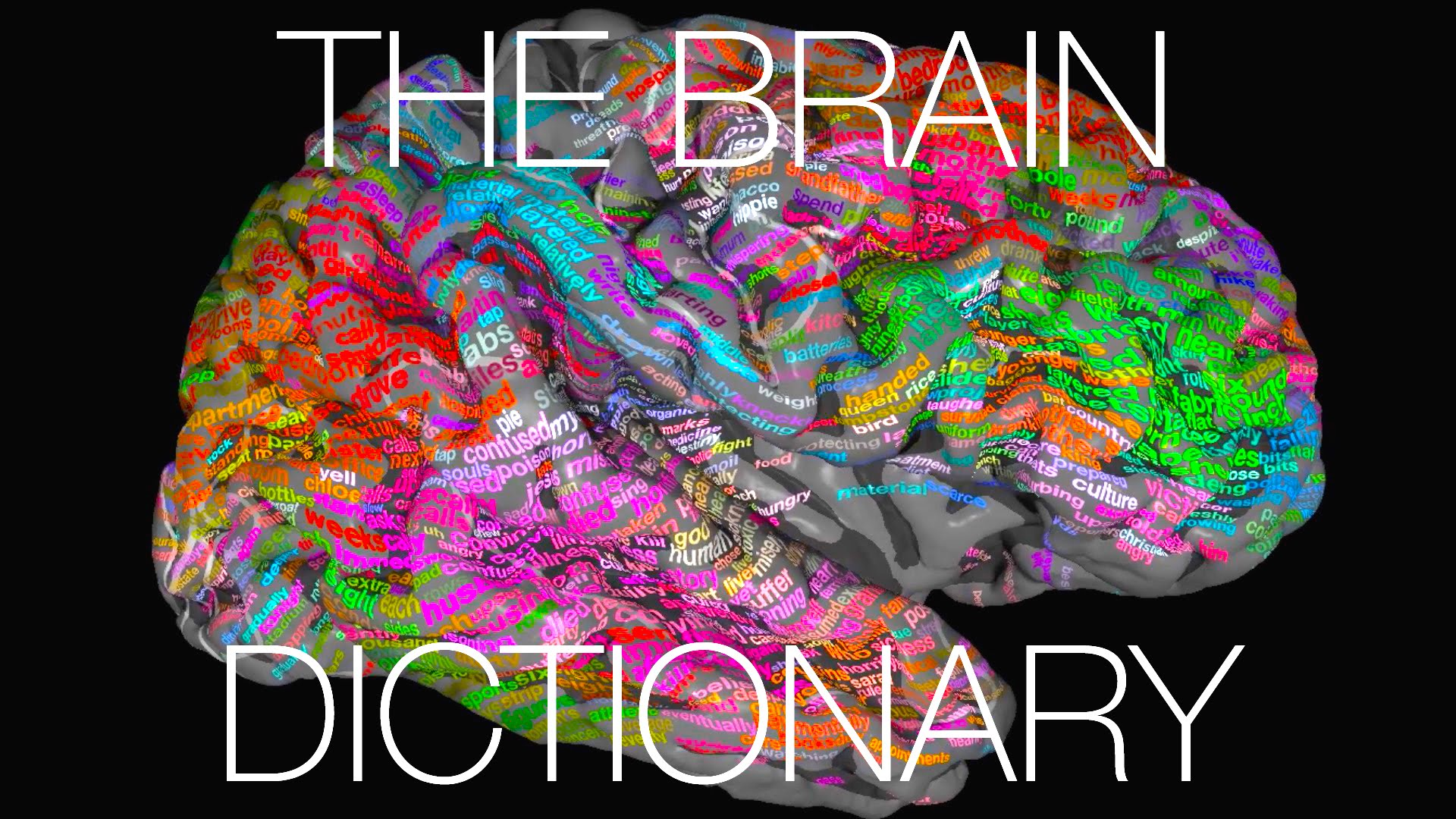 The brain dictionary beautiful 3d map shows how different brain areas respond to hearing different words open culture