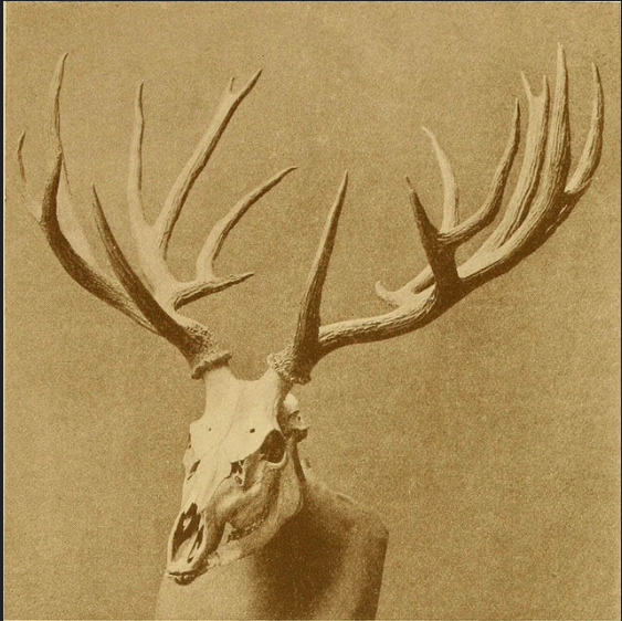Records of Big Game 1910