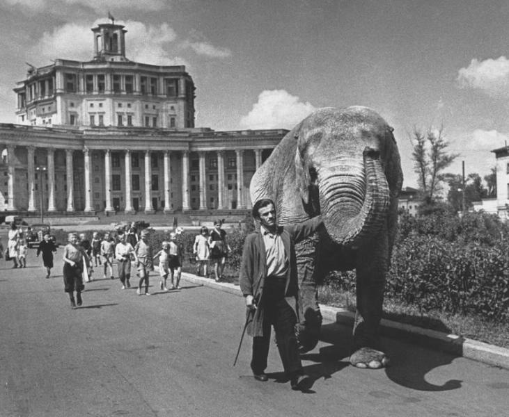 Elephant Red Army Theater